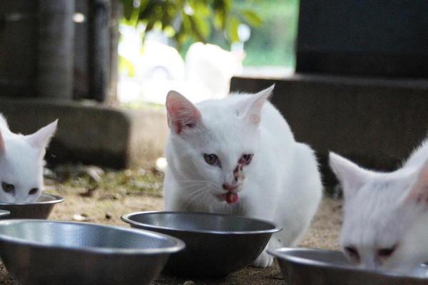 DSC09823 ユミの子猫.jpg