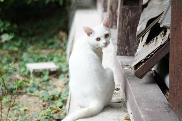 DSC09882 ミルクの子猫.jpg
