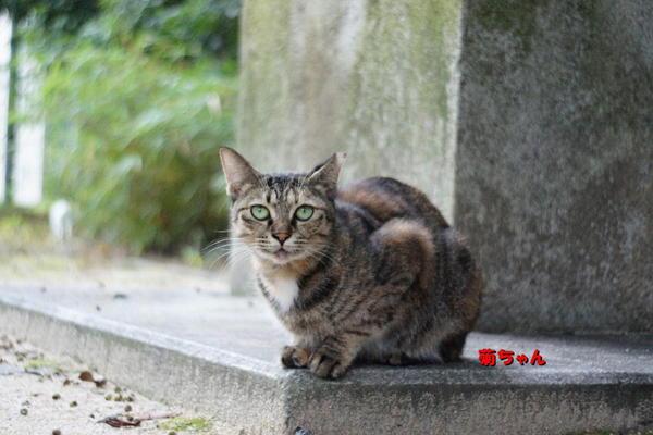 DSC09888 菊.jpg