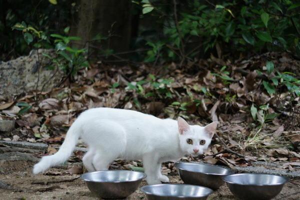 DSC09892 ユミの子猫.jpg
