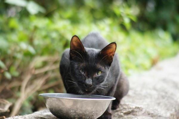 DSC09952 黒猫.jpg