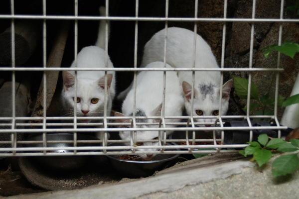 DSC09964 ミルクの子猫.jpg