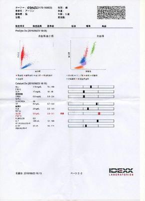 あーりん血液検査 P2.jpg