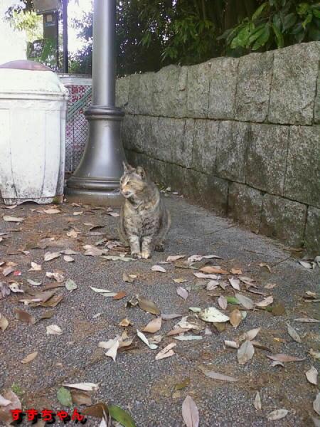 画像-0097 すずちゃん.jpg