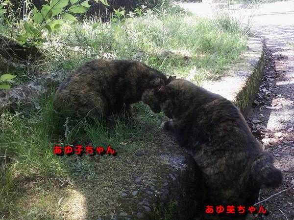 画像-0105 あゆ子ちゃんとあゆ美ちゃん.jpg