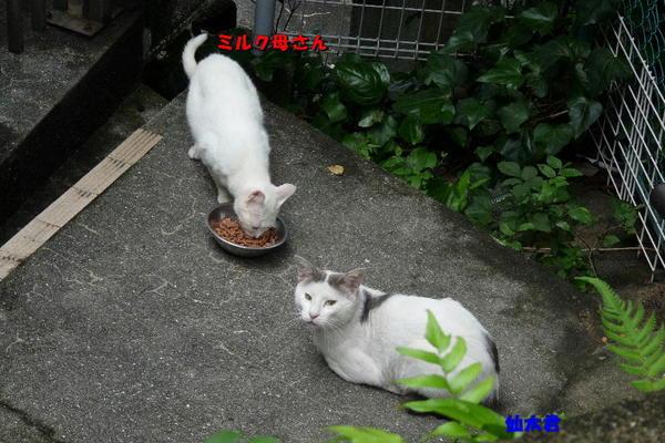 P1150581 ミルクと仙太.jpg