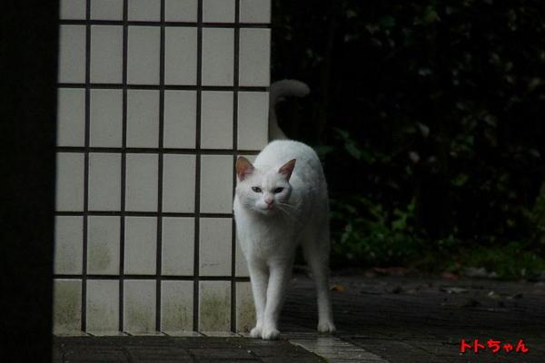 P1150610 トト.jpg