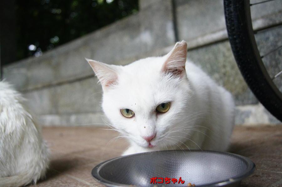DSC04489 ポコちゃん.jpg