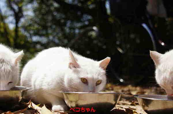 DSC04203 ペコちゃん.jpg