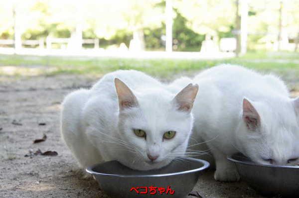 DSC05856 ペコちゃん.jpg