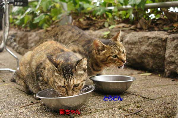 DSC06167 菊ととらどん.jpg