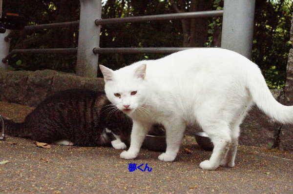 DSC09184 夢くん.jpg